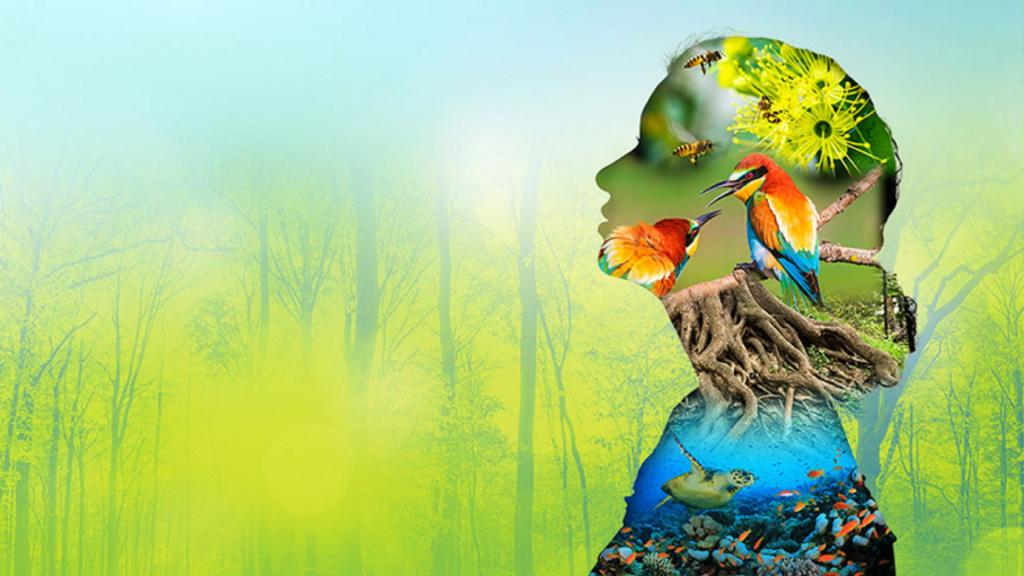 How To Conserve Our Biodiversity